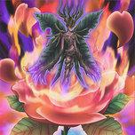 Rose Flame